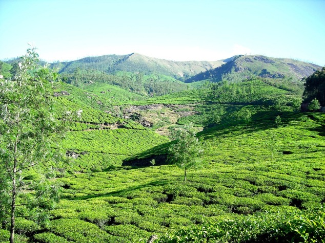 Munnar Summer Destinations in India